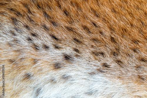 Foto auf Leinwand Luchs Texture spotted wild animal fur . Wild forest lynx