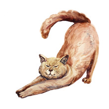 Watercolor Cute Red Hair Cat S...