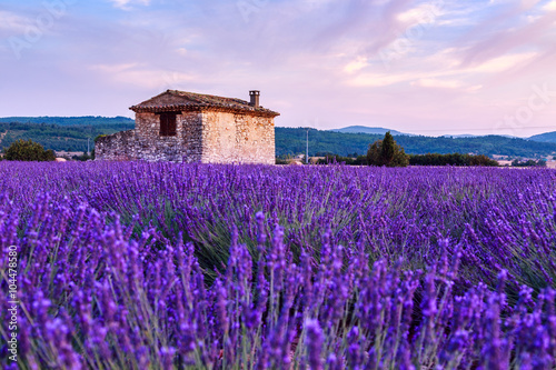 Poster Prune Lavender field summer sunset landscape near Sault
