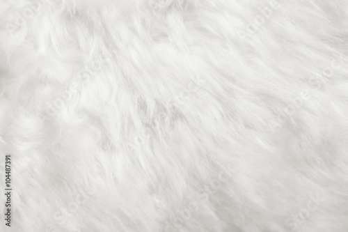 Fotomural natural white fur background