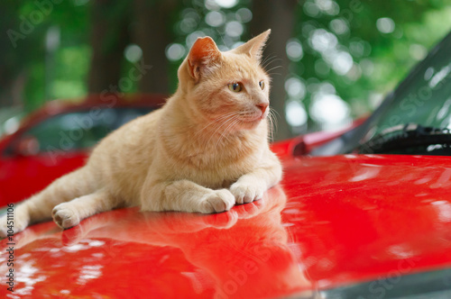 Photo sur Toile Rouge 猫