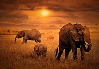 Elephants at  Sunset Background