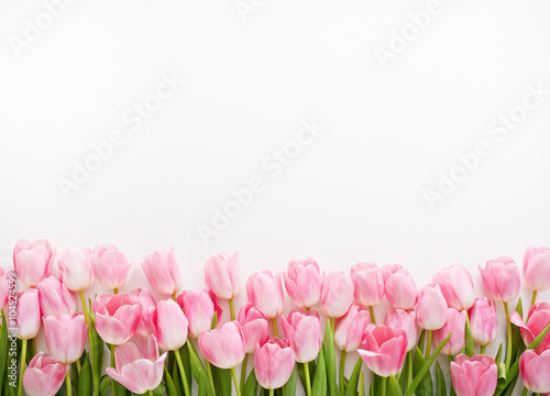 Spoed Foto op Canvas Tulp fresh spring pink tulips on white background