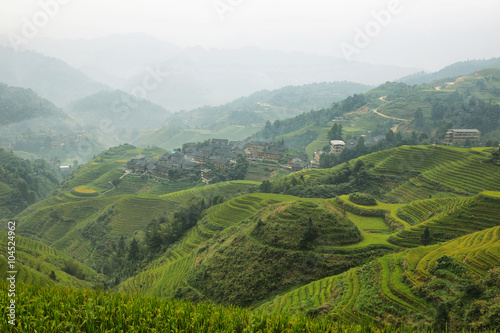 Poster Rijstvelden Views of green Longji terraced fields and Dazhai village