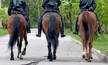 Three Horses With Equestrians In A Police Form, The Rear View