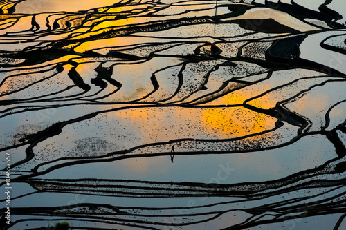 Garden Poster Rice fields Terraced rice field in water season in YuanYang, China