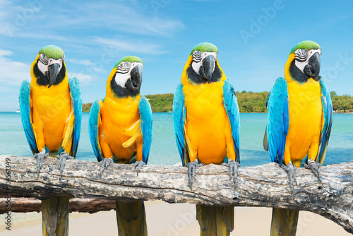 Blue and Gold Macaw on tropical beautiful beach and sea