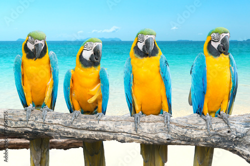 In de dag Papegaai Blue and Gold Macaw on tropical beautiful beach and sea