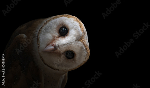 Spoed Fotobehang Uil common barn owl ( Tyto albahead ) close up