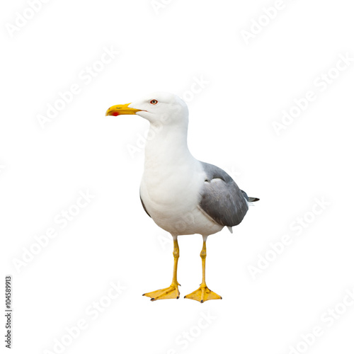 Seagull, isolated on white background Wall mural