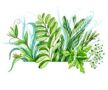 Watercolor Bunch Of Green Plants