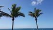 Dwie palmy