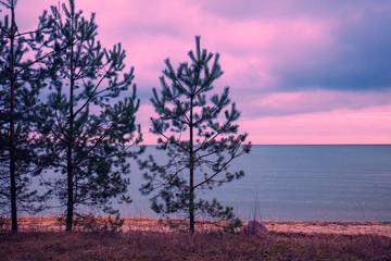 FototapetaPine trees near sea. Neringa, Lithuania