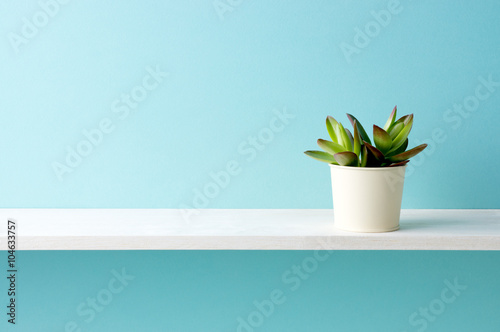 Foto  Blauer Hintergrund und Regale und Succulents