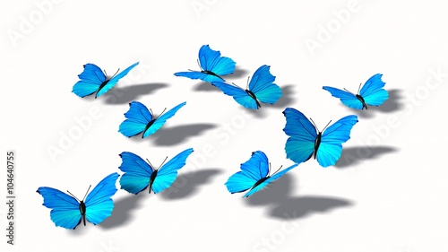 Valokuva  Blue butterflies isolated on white background