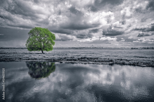 Staande foto Bleke violet black and white landscape and green tree