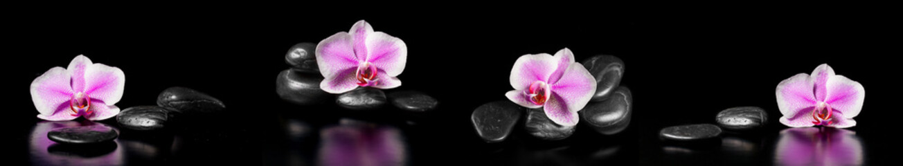 Fototapeta Storczyki Horizontal panorama with pink orchids and zen stones on black ba