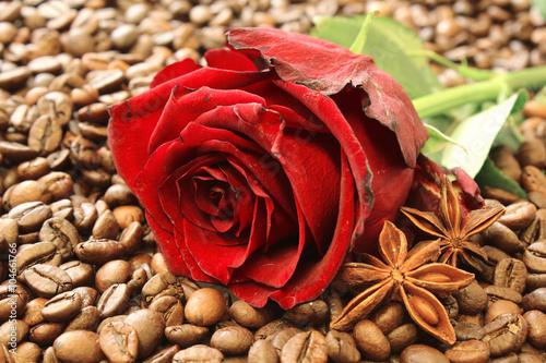 roza-z-anyzem-na-kawowych-fasolach