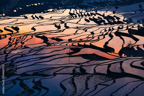 Photo Stands Rice fields Colorful rice field terrace in China from aerial view