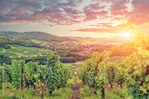 Photo sur Aluminium Vignoble Panorama of Burgundy vineyards . France