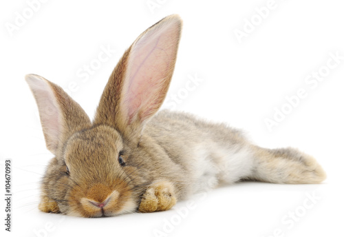 Fotografia Rabbit