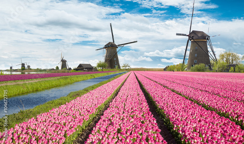 Cadres-photo bureau Rose banbon Windmill with tulip field in Holland