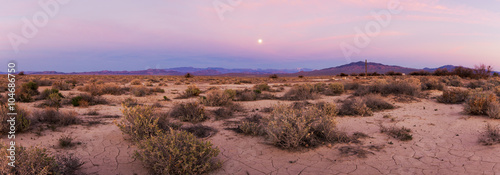 Garden Poster Light pink Death Valley at Dawn