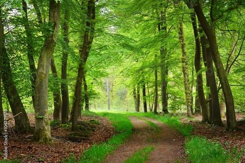 Deurstickers Groene Walkway in a spring forest in the Netherlands