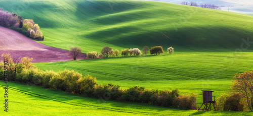 Foto op Canvas Pistache Landscape with Agricultural Fields