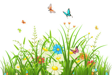 Naklejka Na szybę Green grass with flowers and butterflies isolated on white