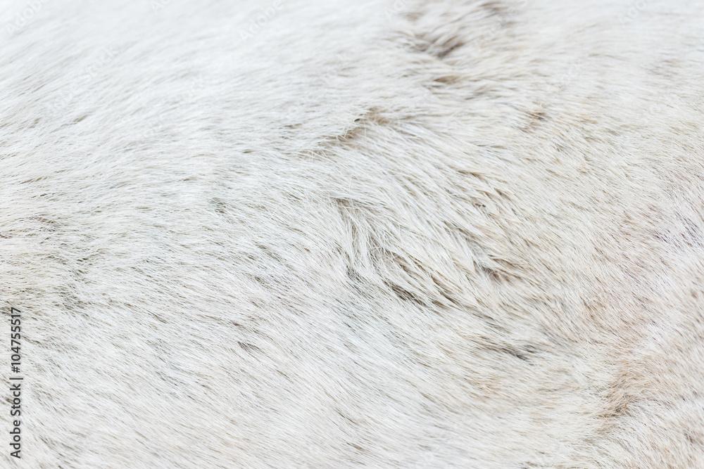 Fototapeta Dog fur texture