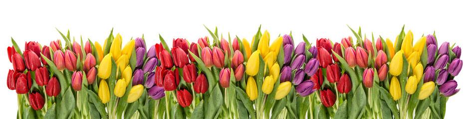Panel Szklany Tulipany Fresh spring tulips water drops. Flower border