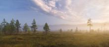 Misty Dawn On The Bog