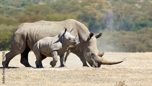 Keuken foto achterwand Neushoorn African white rhino