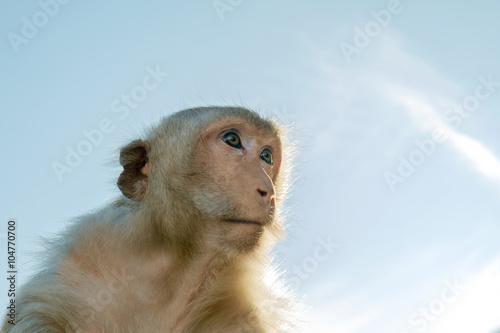 In de dag Monkey / Portrait of monkeys, Lopburi, Thailand.