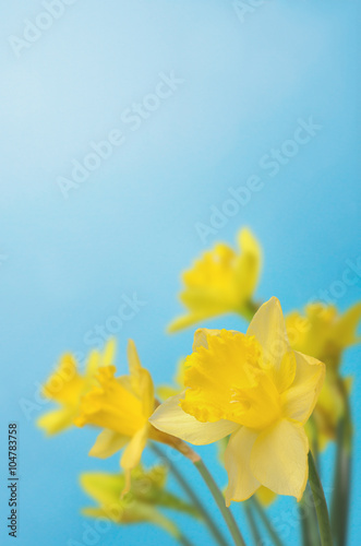 Deurstickers Narcis Spring Daffodils against Blue Sky