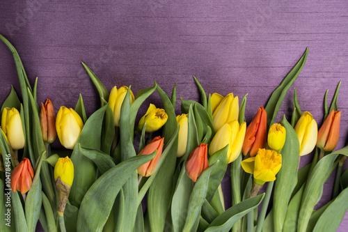 Wiosenny bukiet kwiatów z żółtych i czerwonych tulipanów oraz żonkili  w na fioletowym tle
