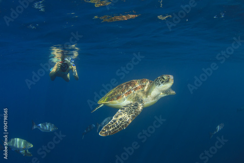 In de dag Schildpad Young woman snorkeling swims with sea turtle