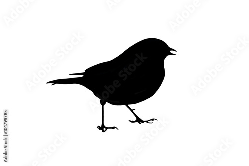Photo  Bird Silhouette