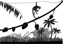 Monkey Hanging On Lians In Jun...