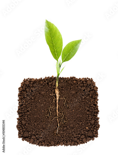 Tuinposter Planten Growing plant with underground root visible
