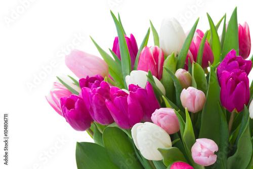 bukiet-rozowych-fioletowych-i-bialych-tulipanow