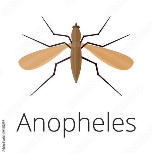 Anopheles mosquito vector illustration Wallpaper Mural