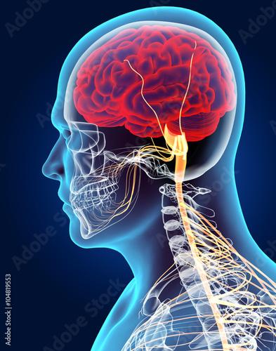 3d-ilustracja-meski-uklad-nerwowy