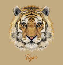 Tiger Animal Face. Vector Bengal Head Portrait. Realistic Fur Beast Of Tiger. Predator Eyes Of Wildcat. Big Cat Head On Beige Background.