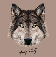 Wolf Animal Face. Scary Grey H...