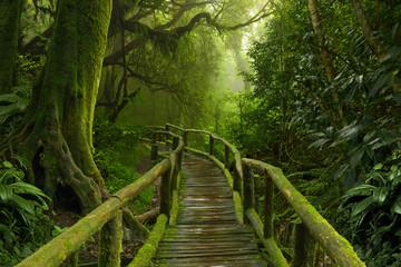 Jungla de Nepal con puente de madera