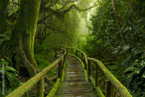 Foto  Jungla de Nepal con puente de madera