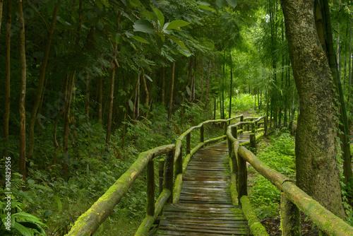 Foto op Plexiglas Landschappen Jungla de Tailandia con puente de madera