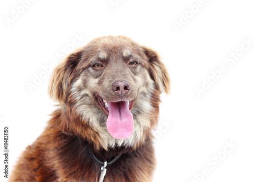 Dog muzzle, mongrel Fototapete